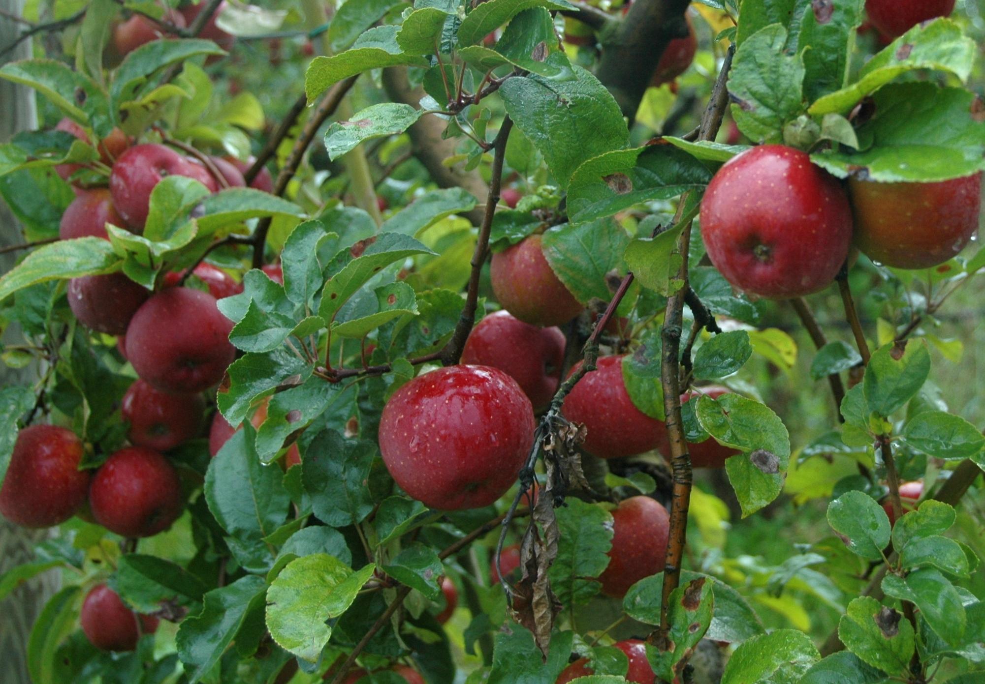Gamme Jus de pommes